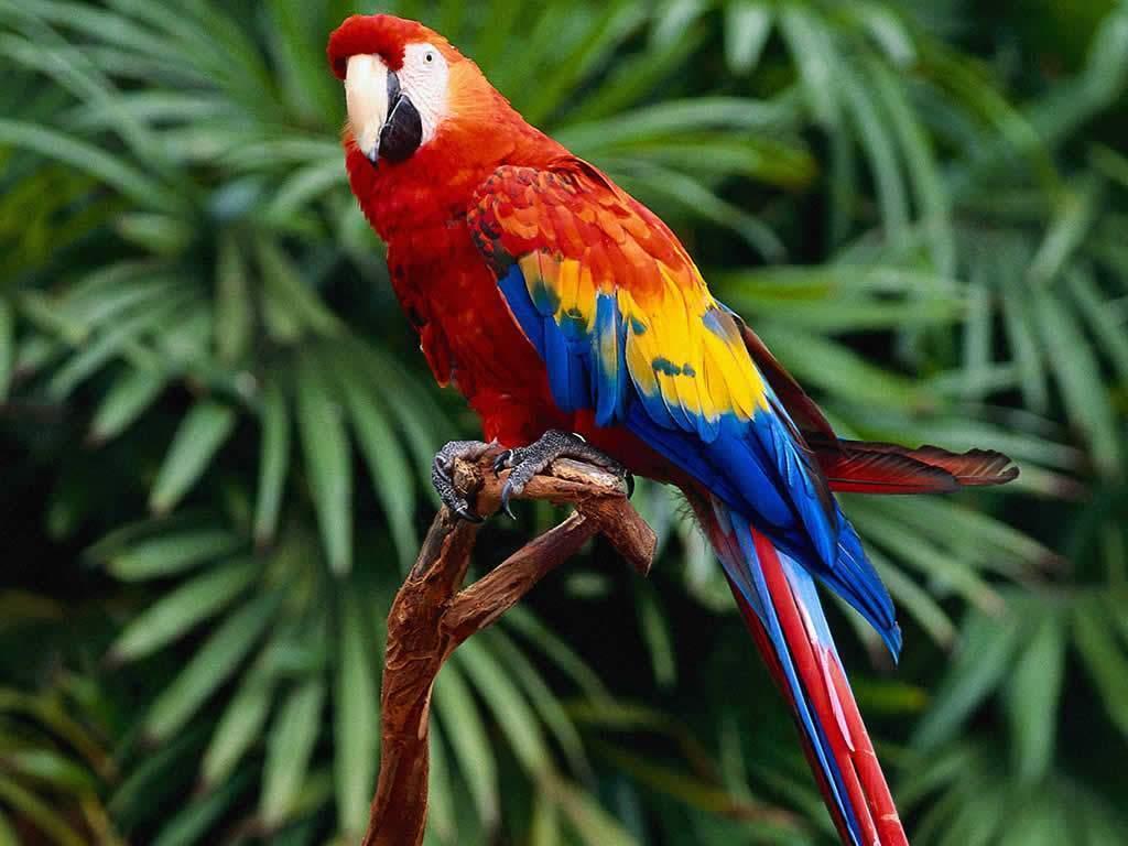 Parrots Adoption Parrots