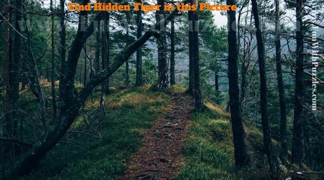 Hidden Face Picture Puzzle