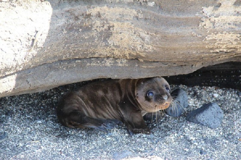 bebe foca feliz