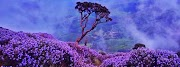 Neelakurinji- Flower blooms once in 12 years