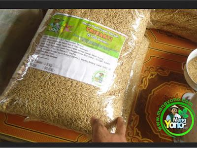 Kuswadi Jombang, Jatim  Pembeli Benih Padi TRISAKTI 75 HST Panen   sebanyak 5 Kg atau 1 Bungkus