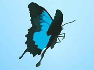 Cartoon Butterfly Vectors