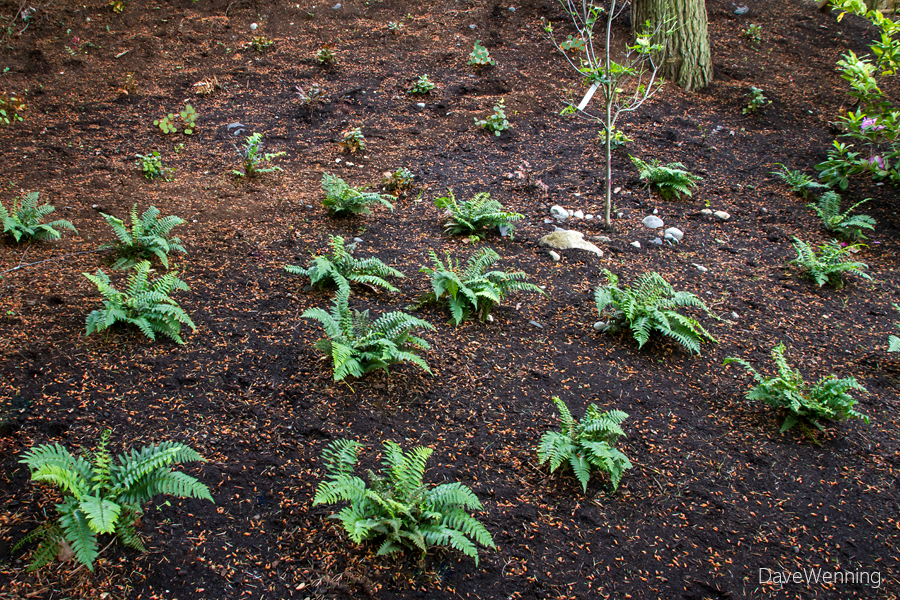 Forest Floor Garden