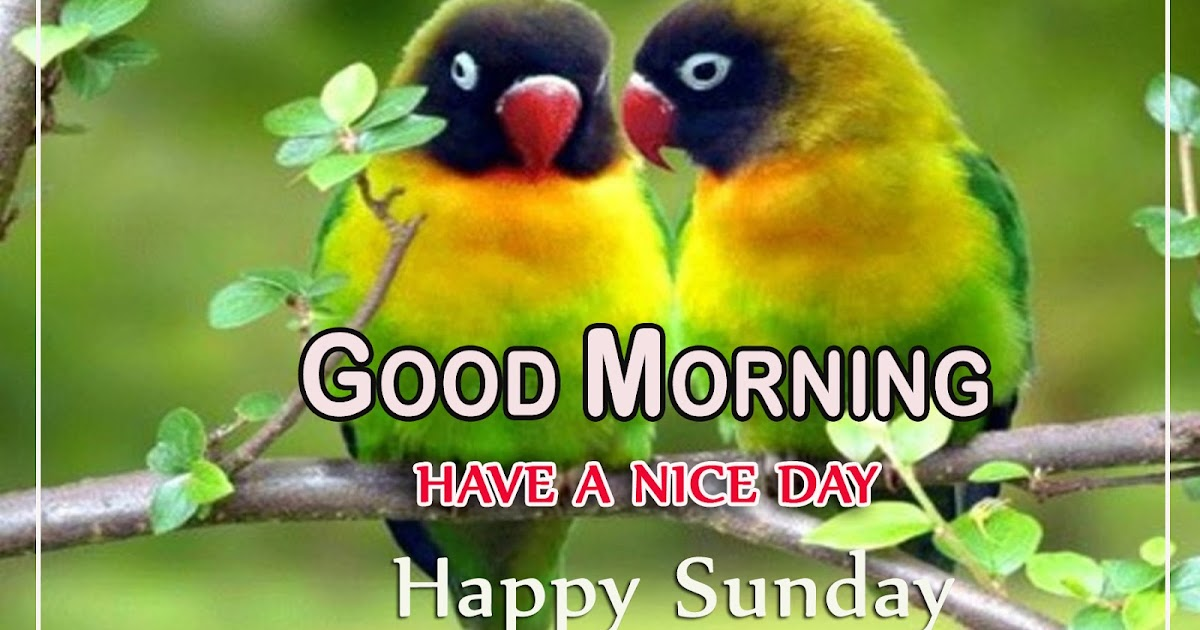 Cute Love Birds Good Morning Photos Background Munna Photo