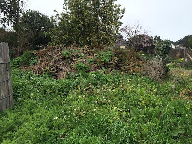 Trash pile in Mendocino
