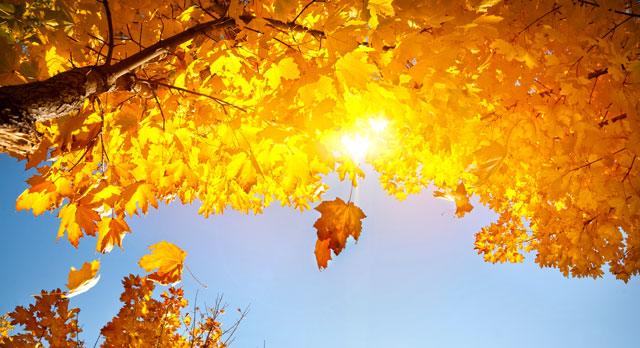 Test: ¿De qué color es tu energía de otoño?