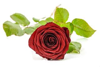 kisah Aisyah binti Abu Bakar menikah, bunga