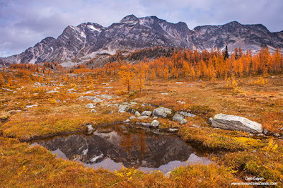 Mt. Monica reflected in a tarn surrounded by fall larches in Monica Meadows, Purcell Range, British Columbia, Canada.