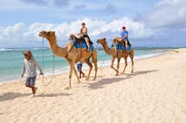 CAMEL SAFARI RIDE
