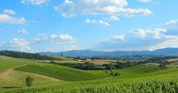 La Treggiaia: un panorama esclusivo tra le vigne