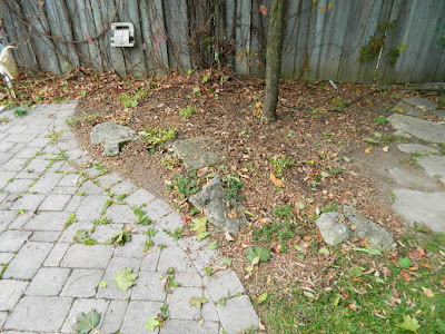 Fall Cleanup After in a Don Mills Toronto Backyard by Paul Jung Gardening Services--a Toronto Gardening Services Company