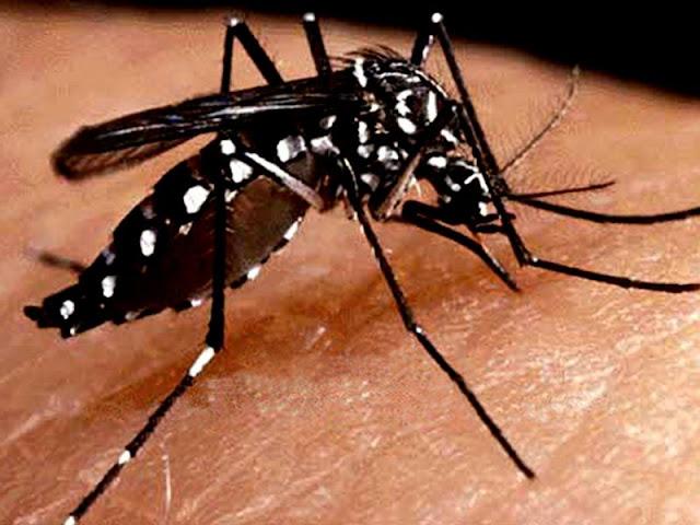Resultado de imagem para chikungunya e zika