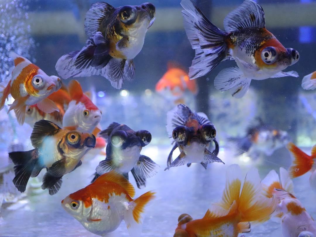 Fish Wallpaper | Free Fish Wallpapers | Nature Wallaper