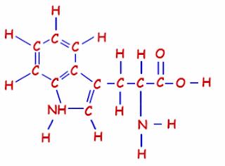 amino acid (tryptophan)