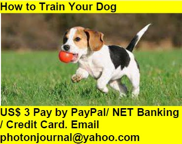 How to Train Your Dog  Book Store Buy Books Online Cash on Delivery Amazon Books eBay Book  Book Store Book Fair Book Exhibition Sell your Book Book Copyright Book Royalty Book ISBN Book Barcode How to Self Book
