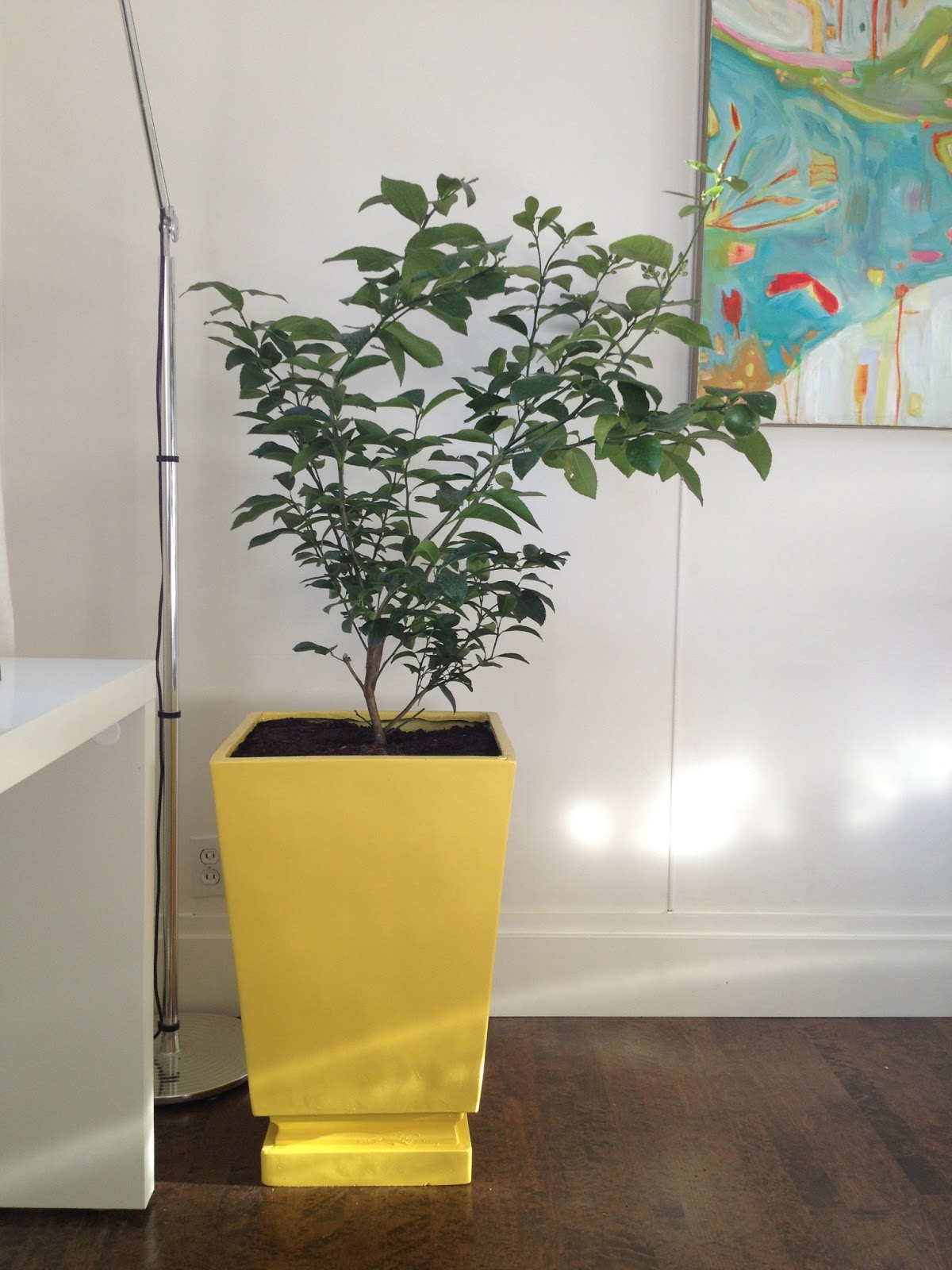 Moth Design By Erica Cook A Calgary Based Lifestyle Blog Painted Planter Lemon Tree Tutorial