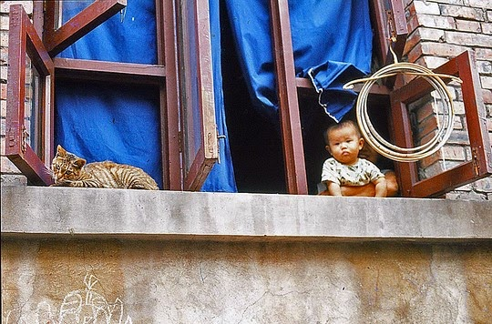 kitten and baby at window