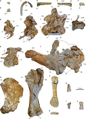 Species new to science paleontology 2018 mansourasaurus after the tectonic separation of the latter from south america 100 million years ago these findings counter hypotheses that dinosaur faunas of the sciox Image collections