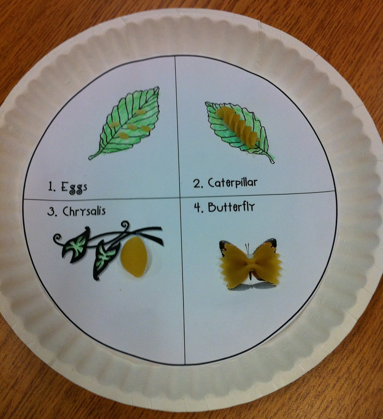 Mrs Prince And Co Butterfly Life Cycle