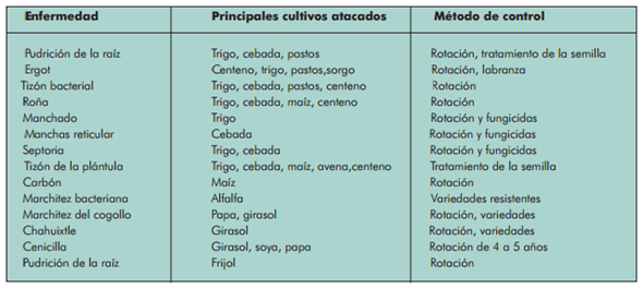 Estrategias biologicas rotacion de cultivos cultivos en Asociaciones de cultivos favorables