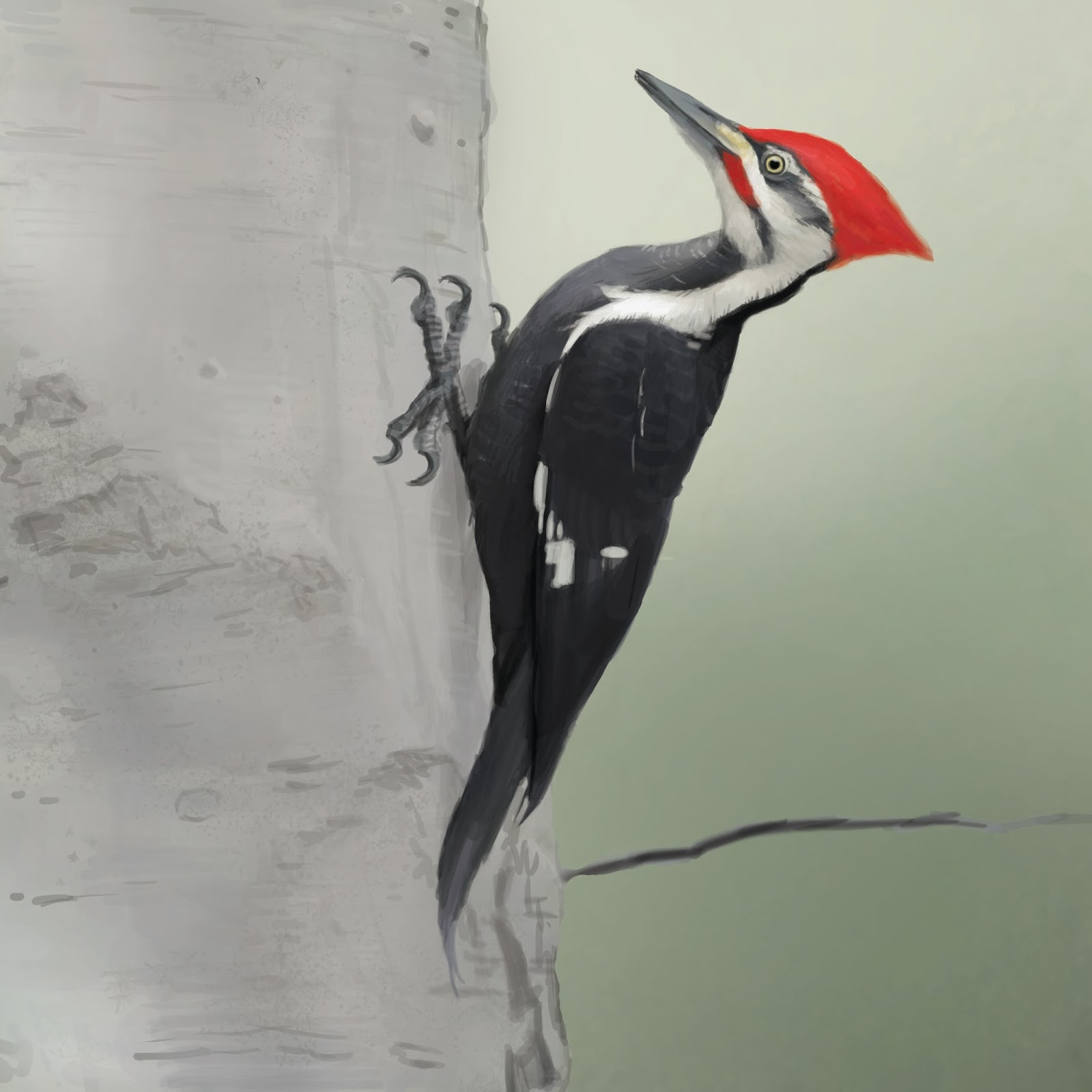 Tim Hough Art: Pileated Woodpecker
