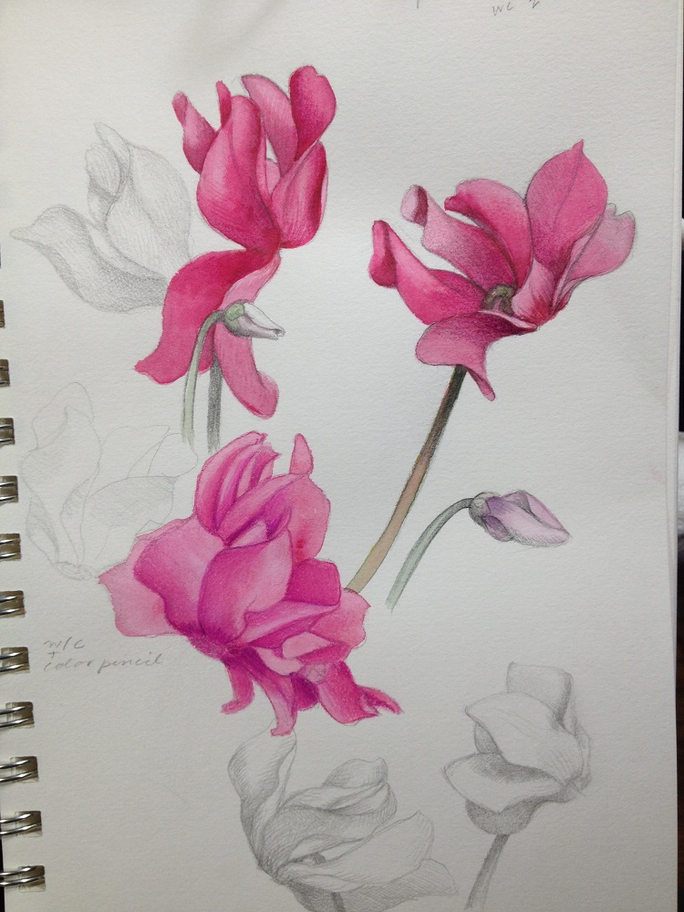 my drawing journal spring flower sketches