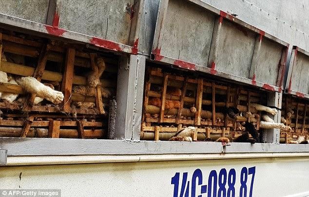 masovna egzekucija macaka