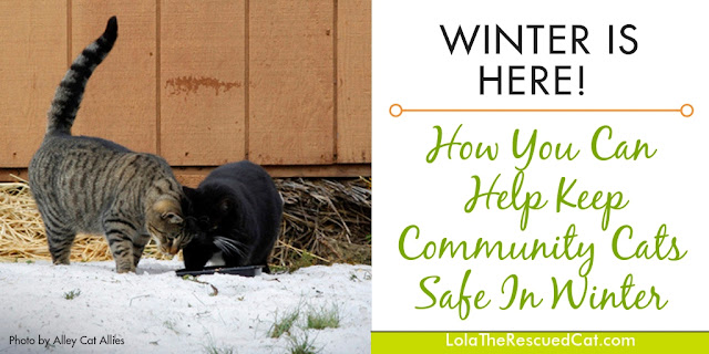 feral cat winter tips