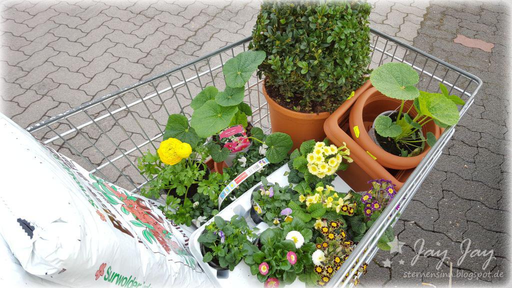 sternensinn garten karten und mehr neue pflanzen und eine harlekinweide. Black Bedroom Furniture Sets. Home Design Ideas