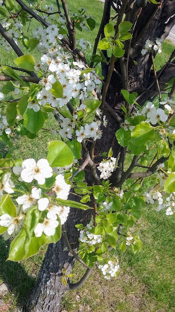 metamora herald tree