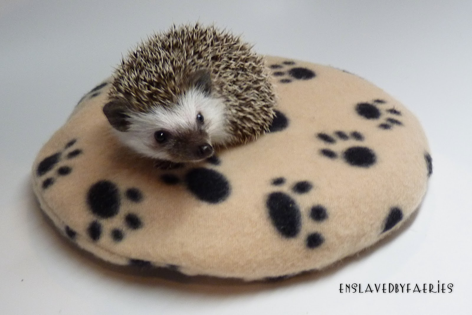 Snugglesafe Heating Pad For Hedgehogs
