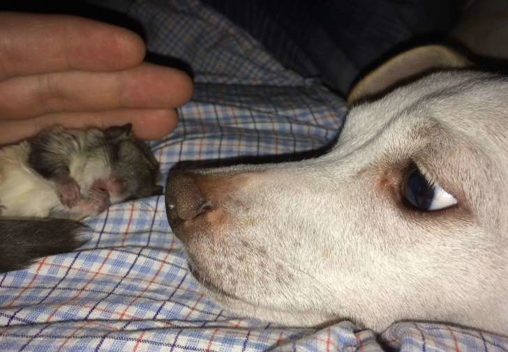 He named her Lady Biscuit. Turns out the small animal is a flying squirrel. - This Guy Saved A Tiny Animal, But Had No Idea What It Actually Was.
