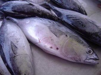 Resepi Serunding Ikan Tongkol