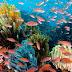 Rincian Biaya Wisata Ke Wakatobi