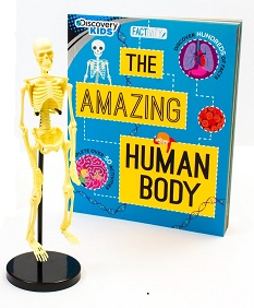 Human Body Factivity Kit BOOK AND SKELETON