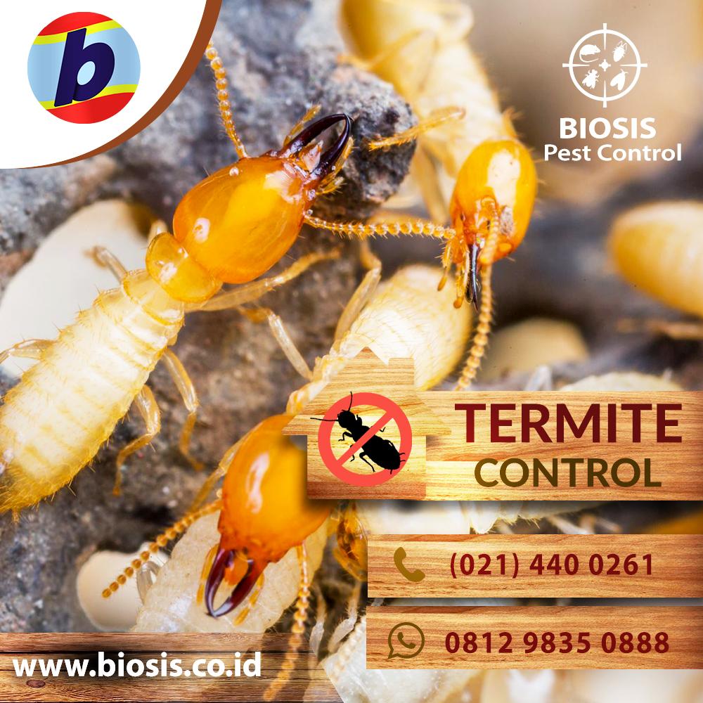 081298350888 - Jasa anti rayap di Cikarang Bekasi dengan Kualitas ... dc65a24139