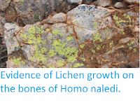http://sciencythoughts.blogspot.co.uk/2016/09/evidence-of-lichen-growth-on-bones-of.html