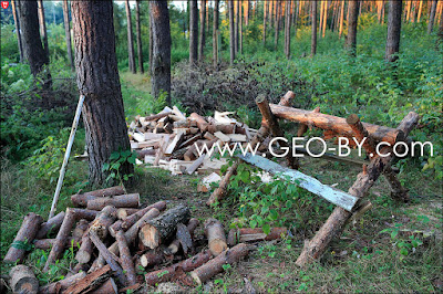 Лесное-Ливье. Порубки леса