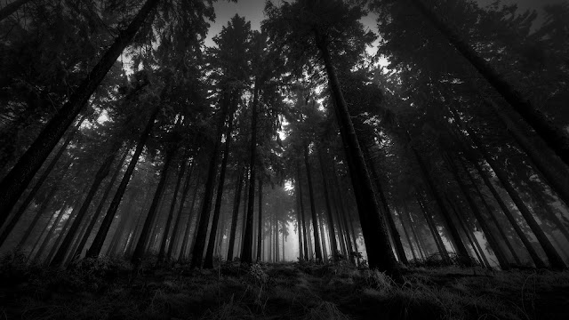 Download 1920x1080 Wood, Black-and-white, From below, Trees, Gloomy, Kroner, Fog, Silence Wallpaper, Background Full HD 1080p