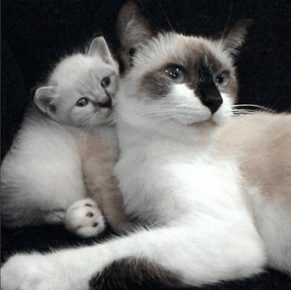 10 Fakta Tentang Kucing