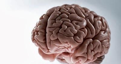 Obat Untuk Kanker Otak   Penyembuhan Penyakit Kanker Otak ...