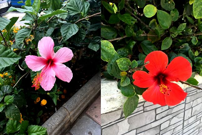 fuengirola spain flowers