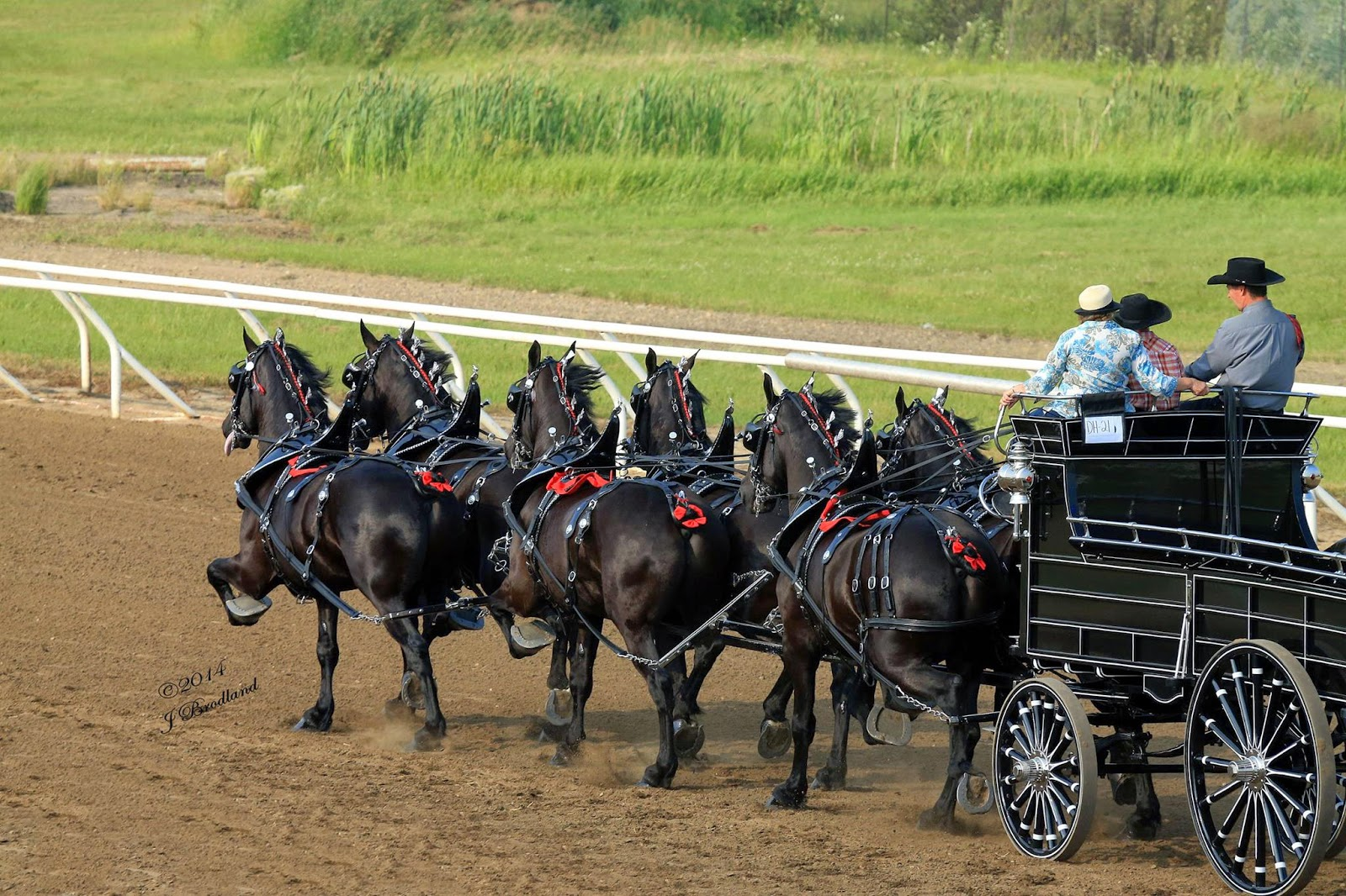 Eaglesfield Percherons North American Six Horse Hitch