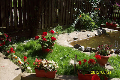gradina de vara plina cu flori