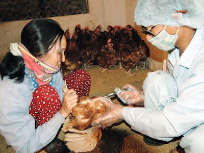 Việt Nam đã sản xuất được vắc xin cúm gia cầm ẢNH: NGỌC THẮNG