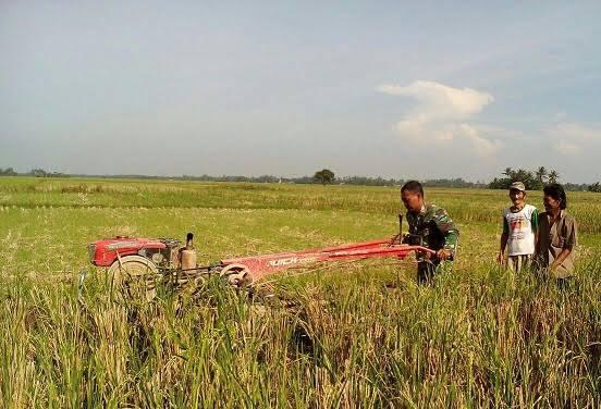 Dengan Traktor, Babinsa Ini dengan Lincah Membajak Sawah Milik Petani di Desa Nagakisar