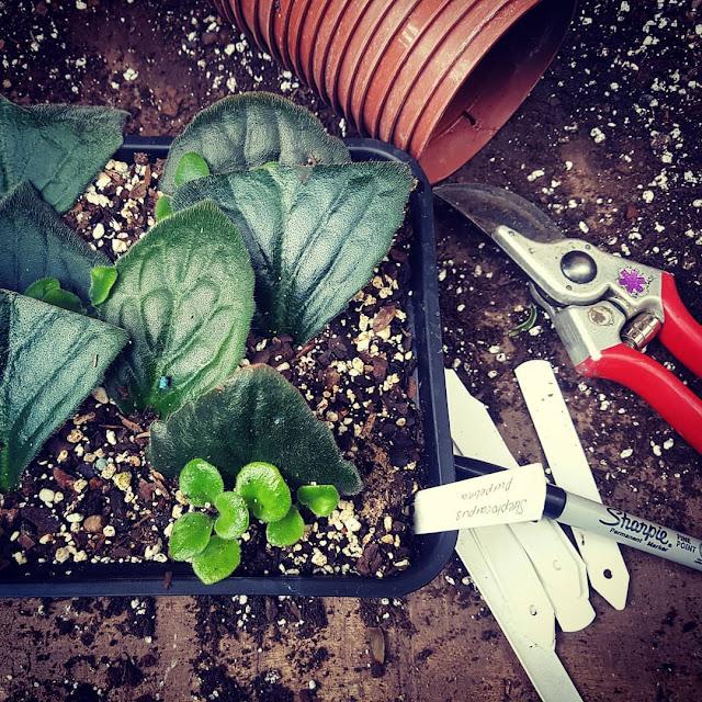 praca-ogrodnik=-anglia