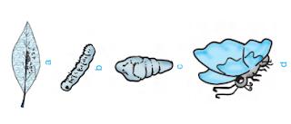 materi ajar ipa tentang metamorfosis pada kupu kupu