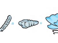 Metamorfosis Sempurna Pada Kupu-Kupu, Katak, dan Nyamuk