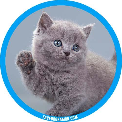 fotos de gato para perfil de twitter